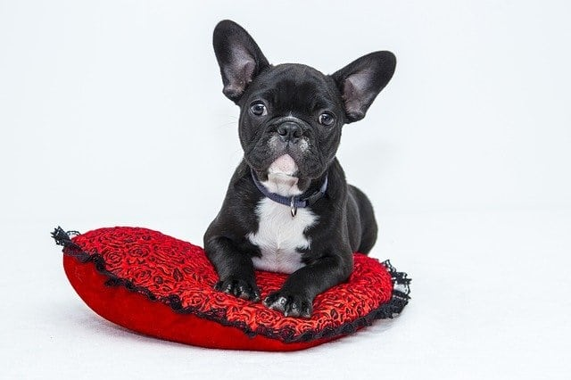 Pets allowed in rented homes